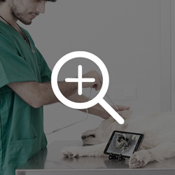 Imágenes de alta definición con el otoscopio veterinario