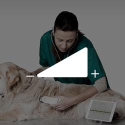5 niveles de sonido con el fonendoscopio veterinario