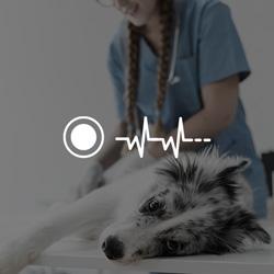 El ECG veterinario permite grabar en tiempo real
