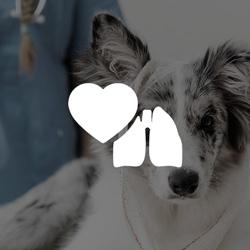 Filtros para corazón y pulmón