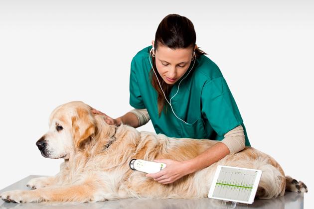 Este fonendoscopio veterinario sirve para animales de todos los tamaños