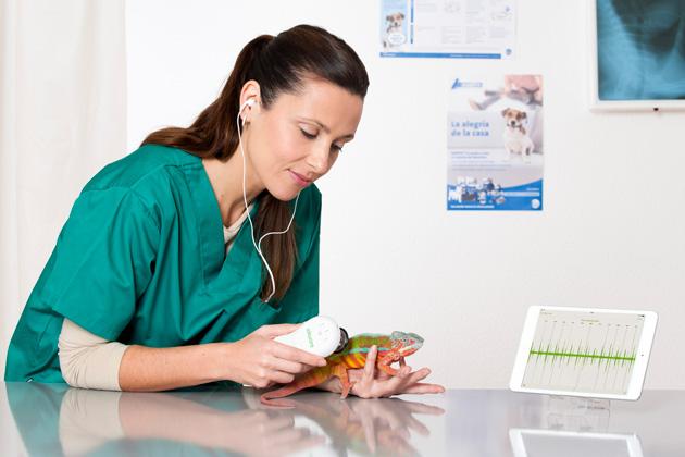 El fonendoscopio veterinario se puede utilizar también en animales pequeños